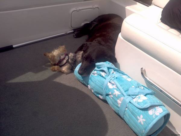 Mickey_n_Maggie_napping_on_the_boat