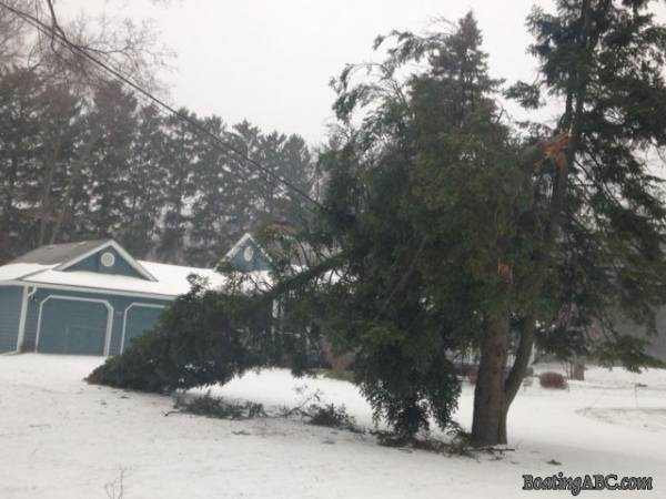 Tree_toppled_by_ice_storm